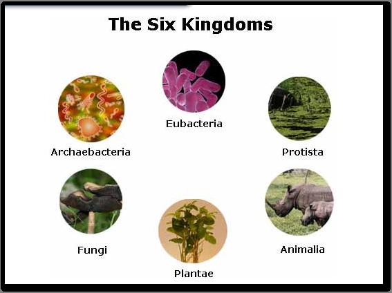 Masterman 7th Grade Science / 7312 Six Kingdoms